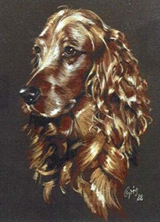 Hundeportrait in